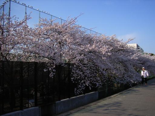 taitou-kugawa